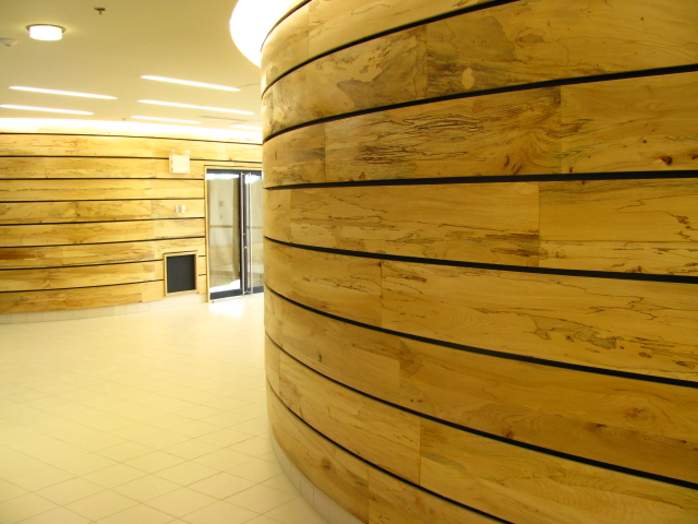 curved elm wall panels