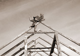 Timber frame tradition - a pine at the peak