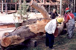 Timber Framing - Incorporating a tree into the frame